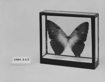 1984.345 (RS115746)