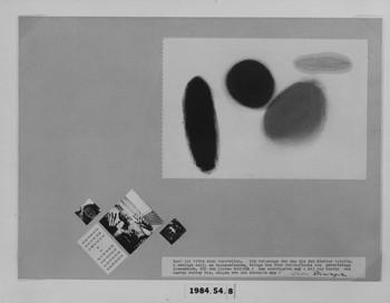 1984.54.8 (RS115798)