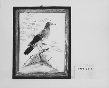1977.373 (RS116612)