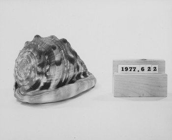 1977.622 (RS116943)
