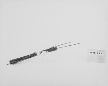 1977.755 (RS117071)