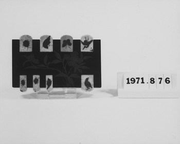 1971.876 (RS117849)
