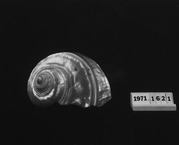 1971.1621 (RS118306)