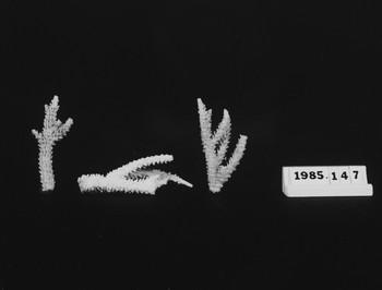 1985.147 (RS118527)