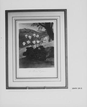 1949.563 (RS119680)